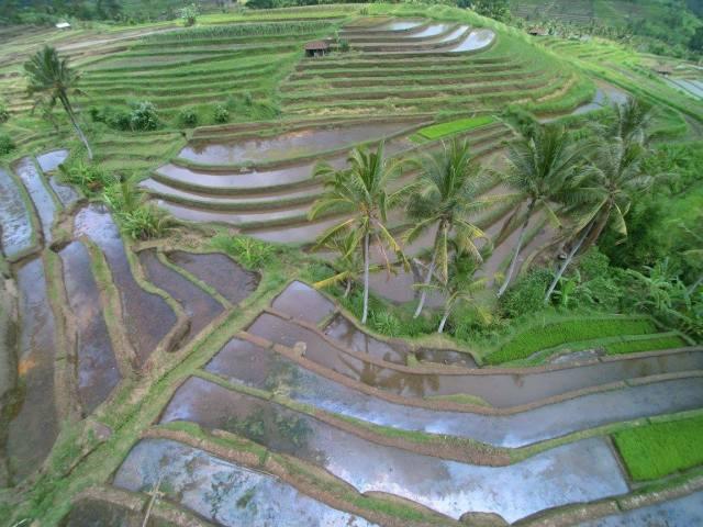 Jatiluwih rice terrace.jpg